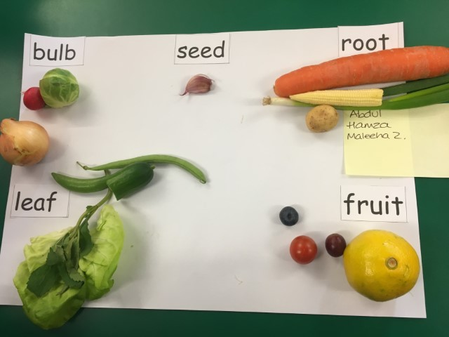 2C aut 3 science sorting parts of plants